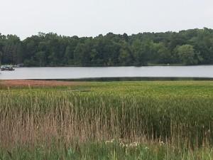 Lake L weeds
