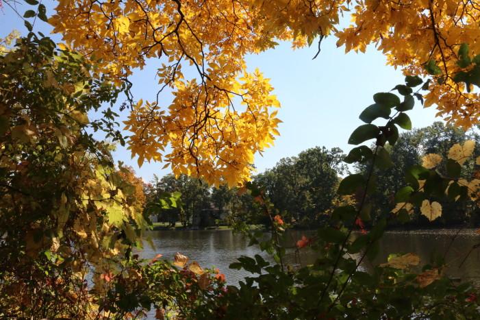 Autumn's turn