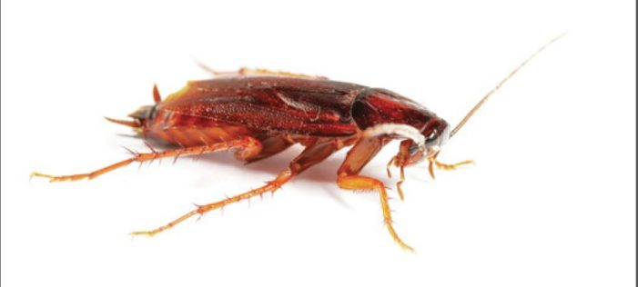 The wild, icky world of cockroaches