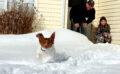 Dog days of winter